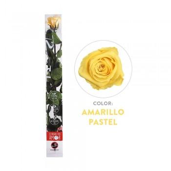 Rosa preservada amarilla - Envío gratis en 24 horas