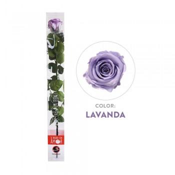 Rosa lavanda preservada - Envío gratis en 24 horas
