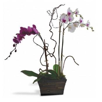 2 Orquídeas blanca y morada