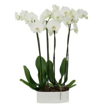 2 Orquídeas blancas