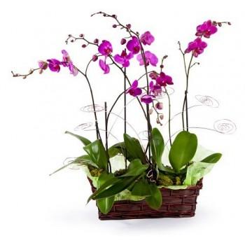 2 Orquídeas rosas